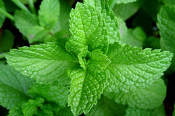 Mint, the summer fresh maker!