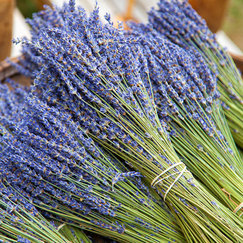 Lavender Bunches on Stem