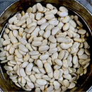 Runner Cannellini Beans