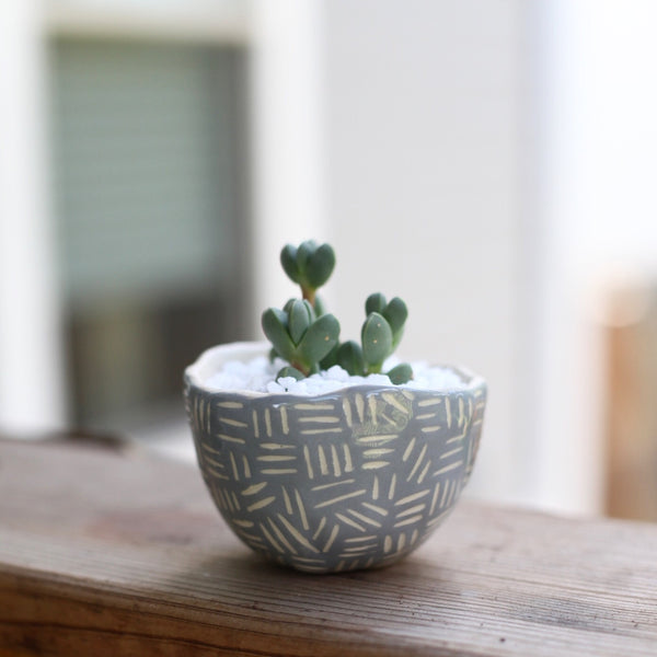 Mini Grey Planter- Carved pattern