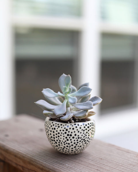 Mini Dotted Planter