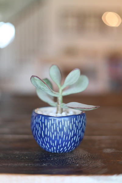 Classic Planter- Blue carved dashes