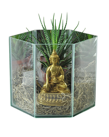 Living Buddha Temple Terrarium with Aloe Vera Plant - Sivalya