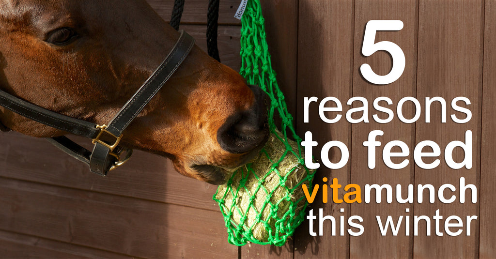 5 Reasons Why You Should Feed VitaMunch In Winter.