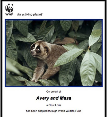 Avery and Masa Adopt a Slow Loris