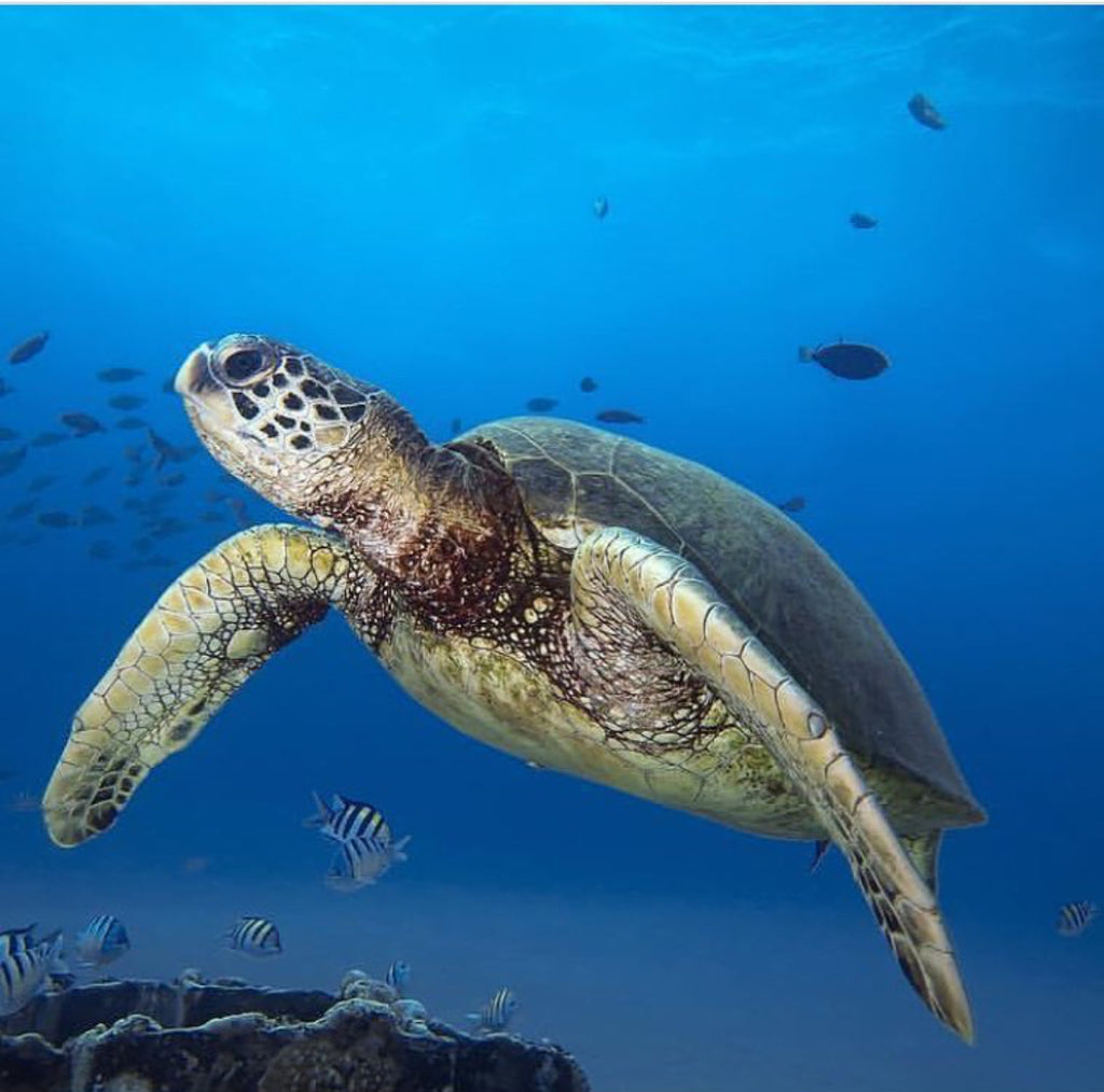 Save the Sea Turtles!