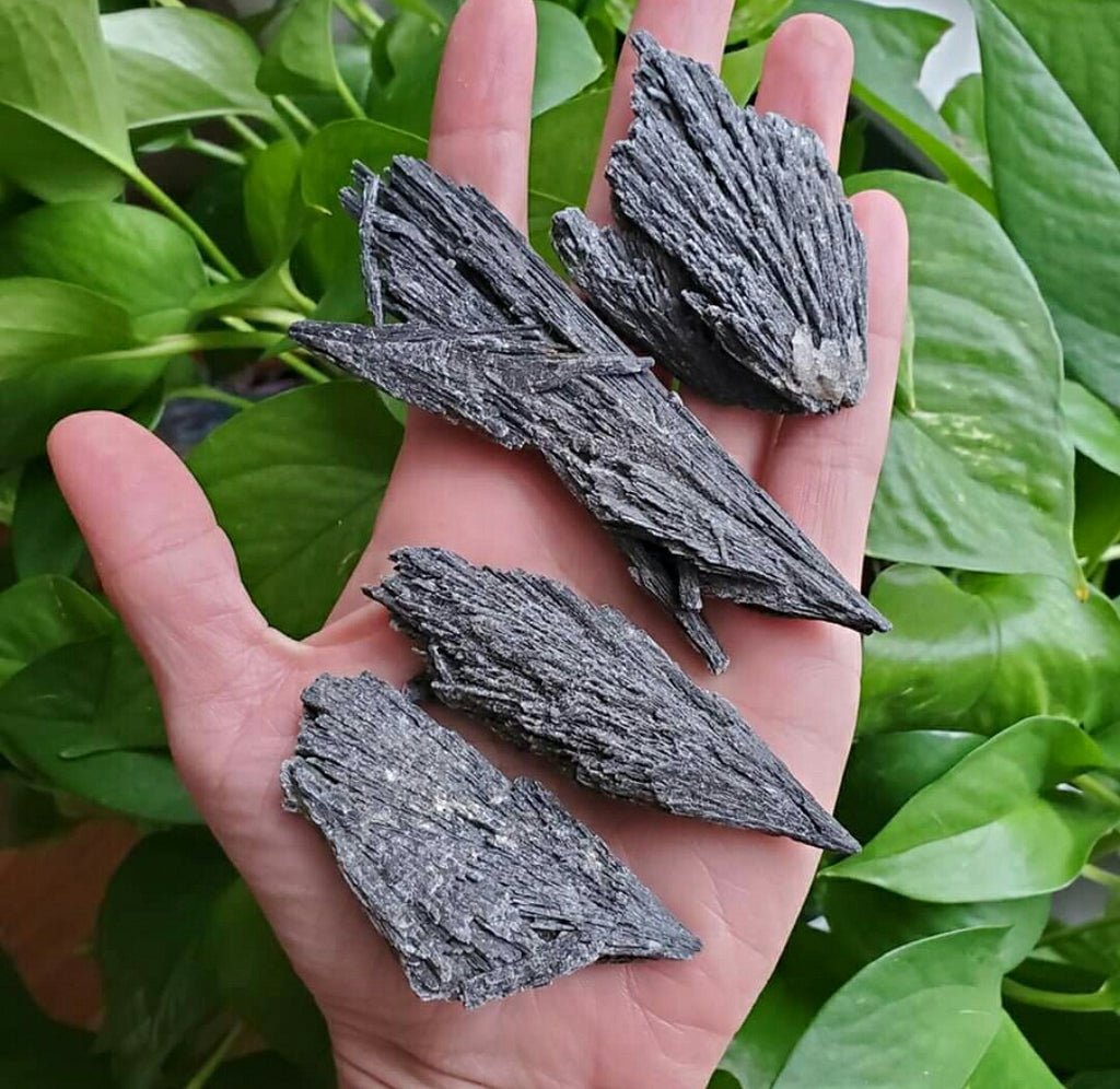 Black Kyanite ☆ Witches Broom