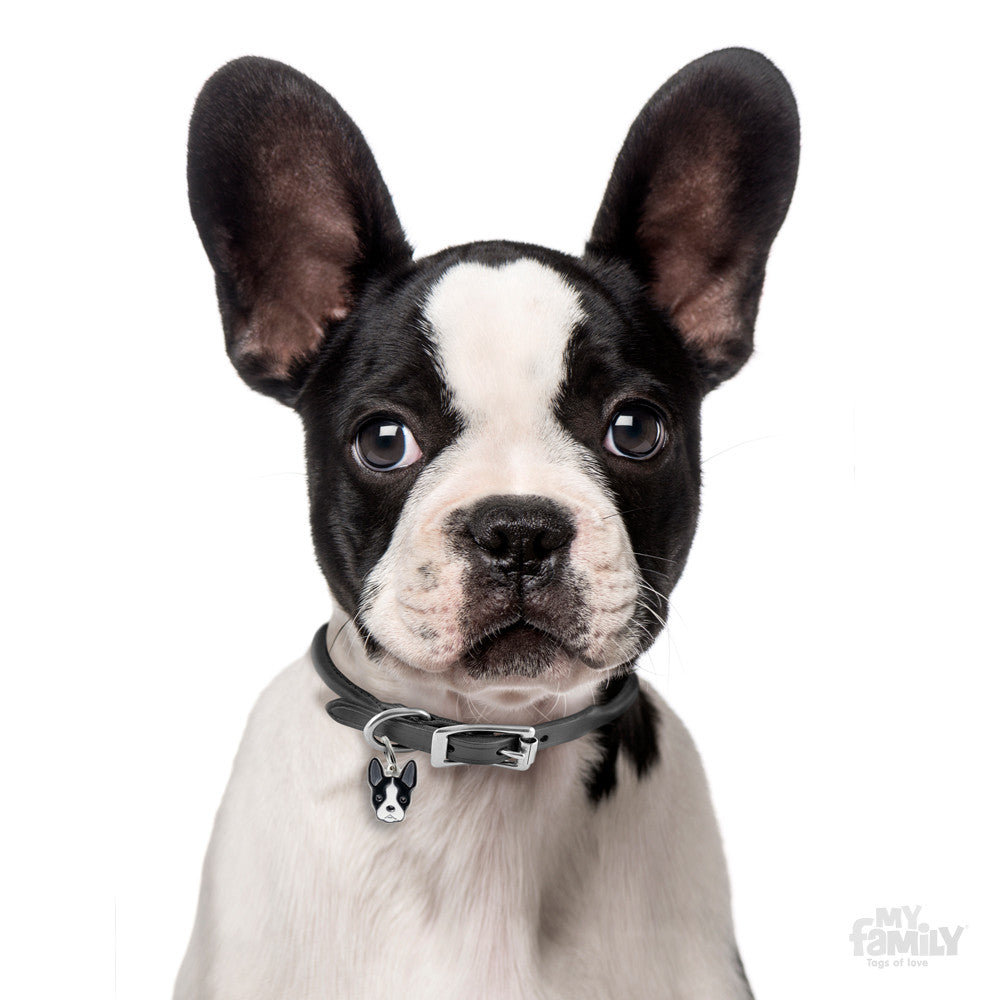 [product vendor]Friends Boston Terrier Tag CharmDog