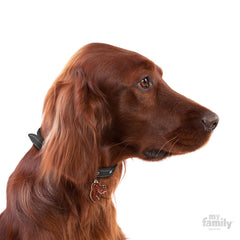 [product vendor],Friends Irish Setter Tag Charm,Dog