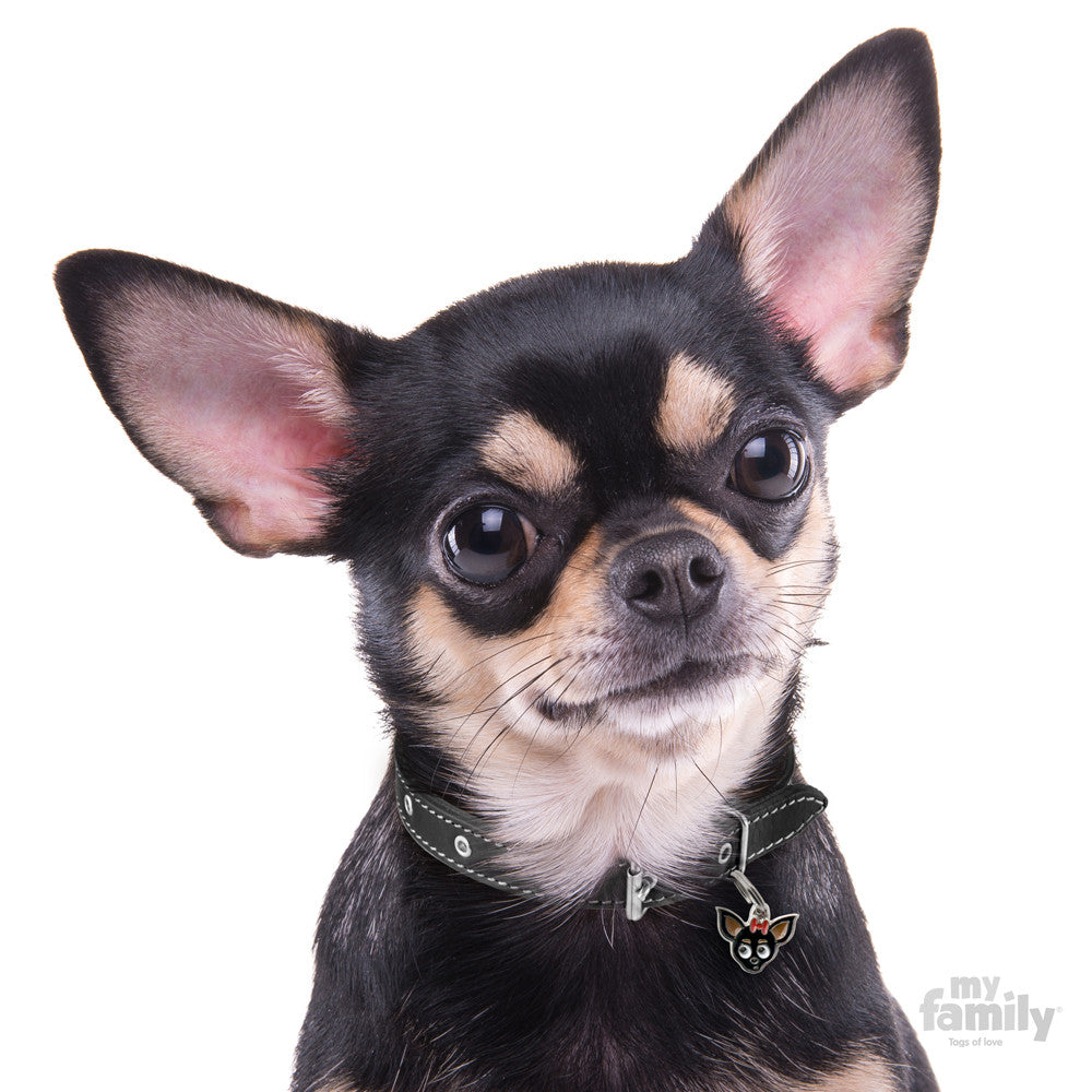 [product vendor],Friends Chihuahua Dog Tag Charm,Dog