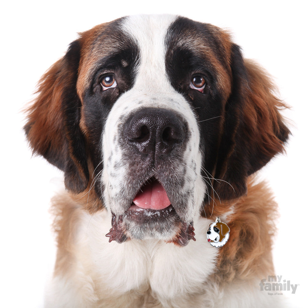 [product vendor],Friends St Bernard Tag Charm,Dog