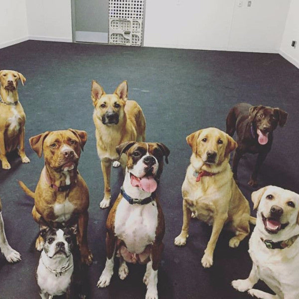 [product vendor]Members Only Doggie DaycareServices