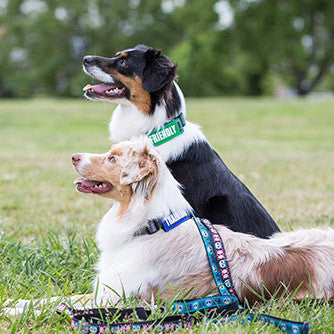 [product vendor]Bark Notes Collar SignsDog