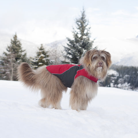 [product vendor],Trilogy 3-in-1 Jacket,Dog