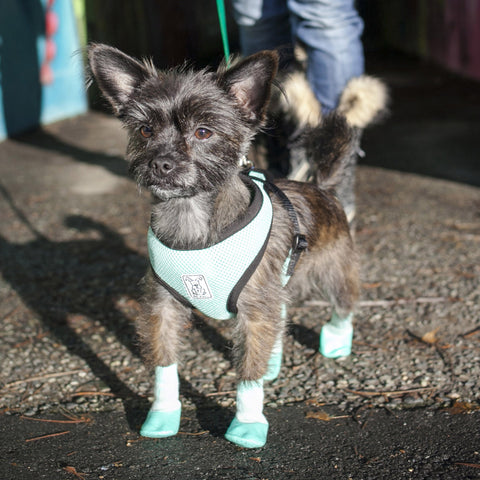 [product vendor],PAWks Sport Socks,Dog