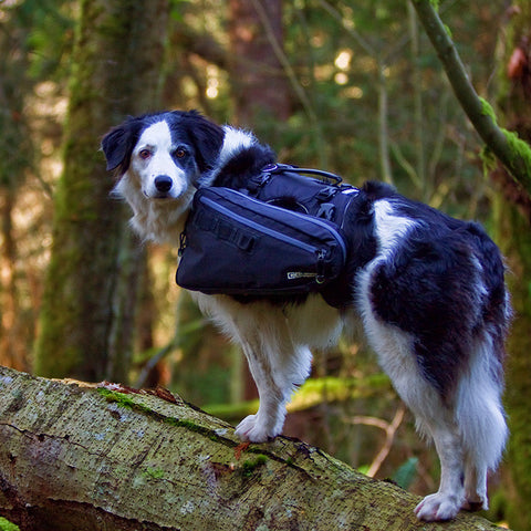 [product vendor],Ultimate Trail Pack,Dog