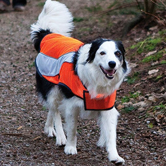 [product vendor]High Visibility Safety VestDog