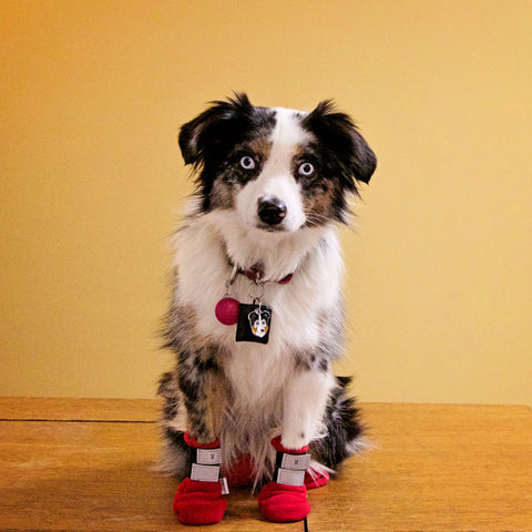 Easy-On Fleece Dog Boots