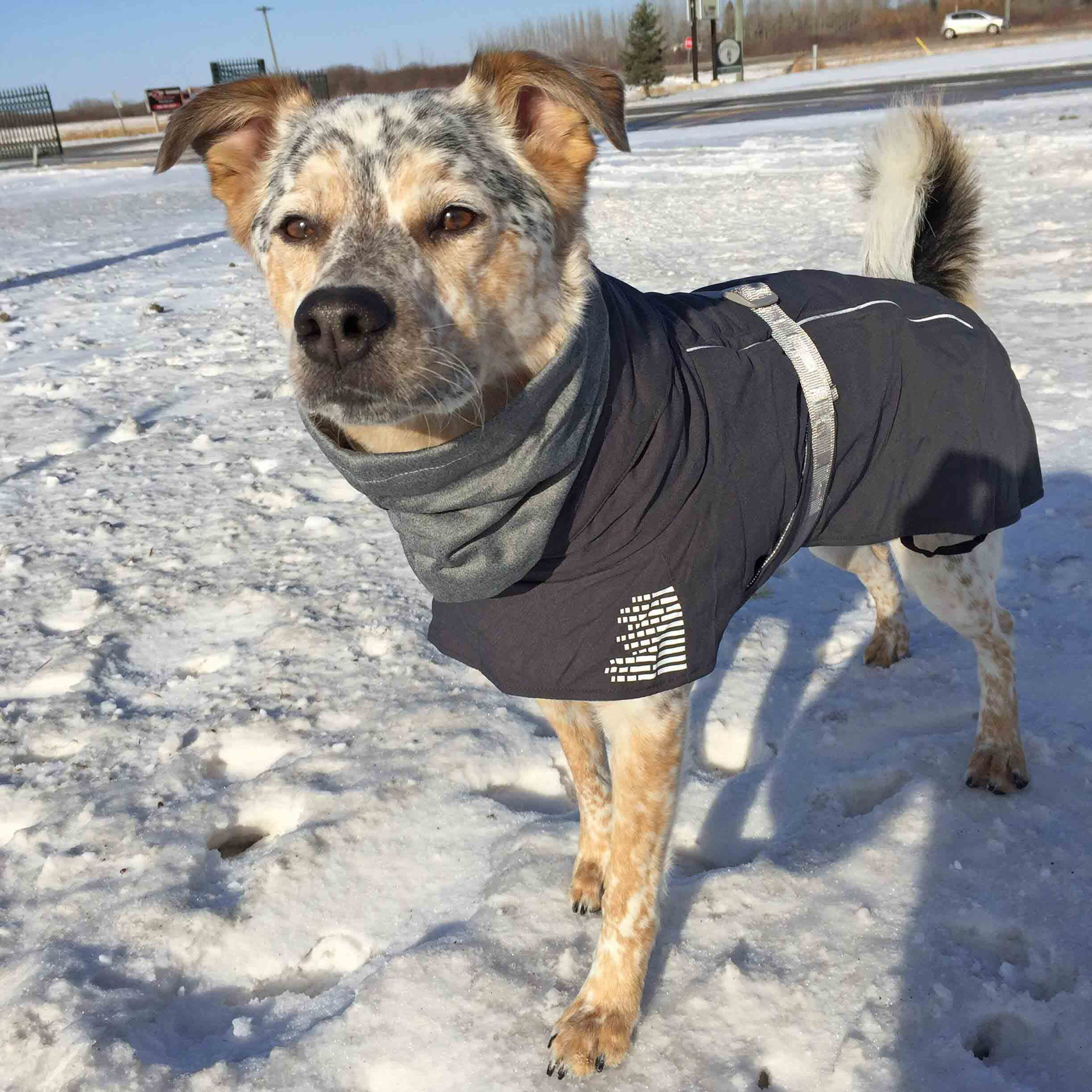 Extreme Warmer Dog Parka