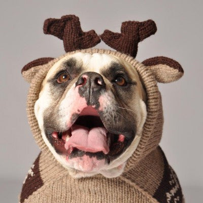 [product vendor],Moosey Wool Hoodie,Dog