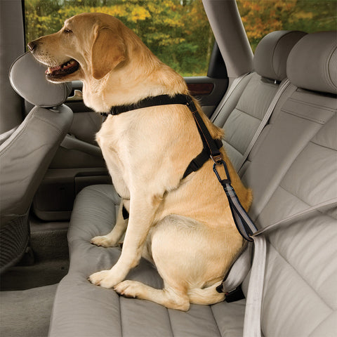 [product vendor],Seatbelt Tether with Carabiner,Dog
