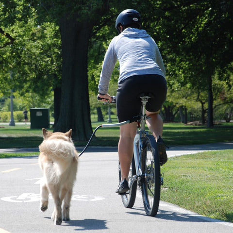Bicycle Attachments For Exercising Your Dog Canvasback Pet Supplies