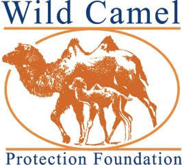 Partnering with Wild Camel Protection Foundation