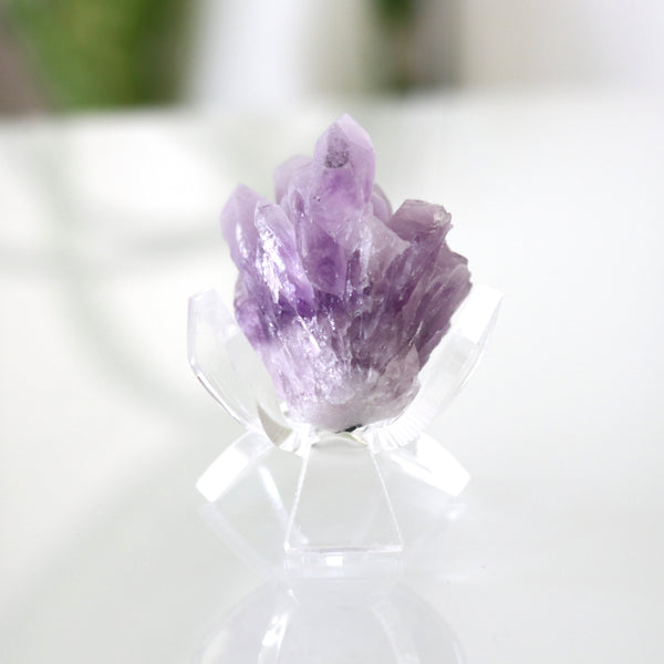"Acrylic Display Stand - 1.75"" Tulip"