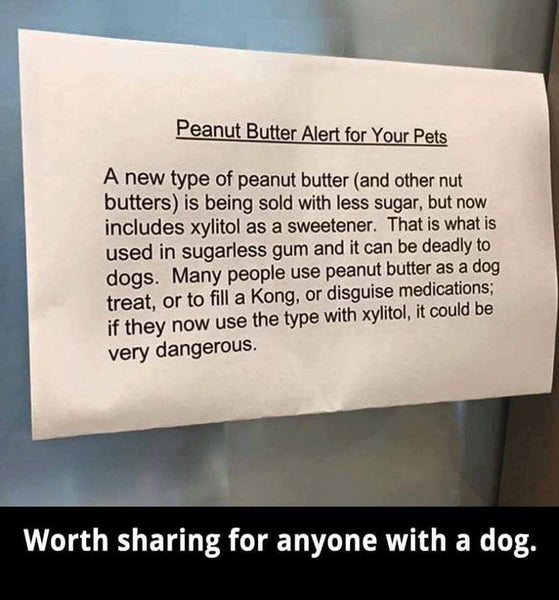 Xylitol and Dogs: A Warning to All Dog Owners