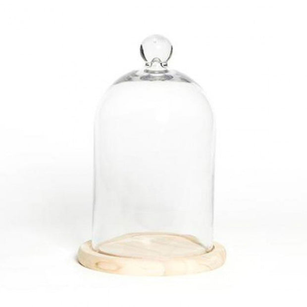 Glass Cloche with Knob & Light Wood Base