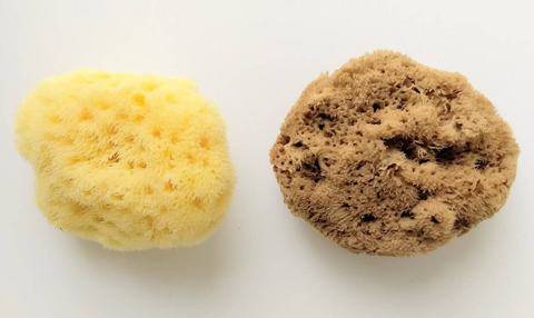 Bleached and Unbleached Sea Sponge Tampon