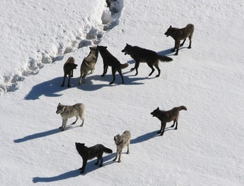 We Are Wolf Pack