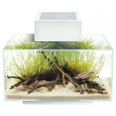 FLUVAL edge - 23 Litre - Glass Aquarium - White - Fish Tank - Browns Pet Range
