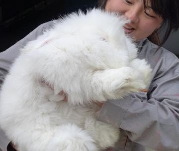 woman holding angora rabbit