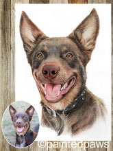 Load image into Gallery viewer, Coloured pet pencil portrait