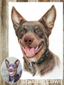 Coloured pet pencil portrait