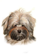 Load image into Gallery viewer, Painted Paw £10 Gift Voucher