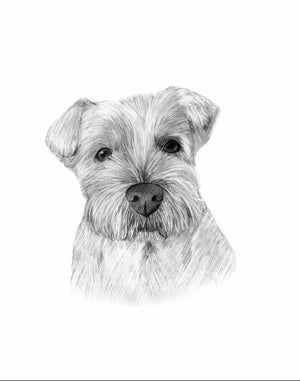 Black & White Pencil Portrait-painted-paws