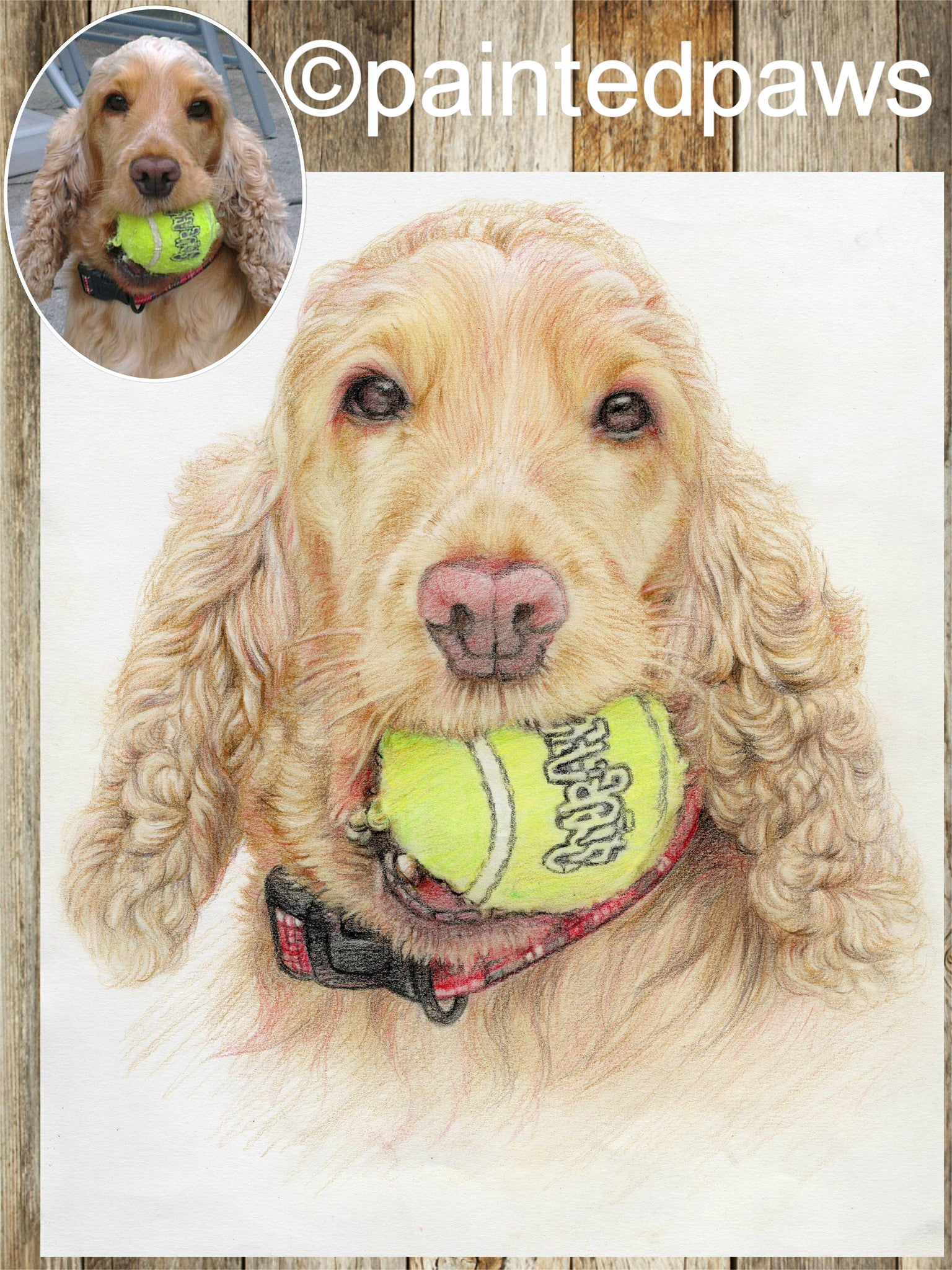 Coloured pencil pet portrait-painted-paws