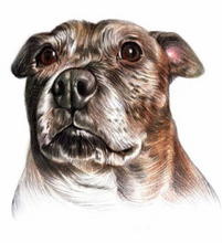 Load image into Gallery viewer, Coloured pencil pet portrait