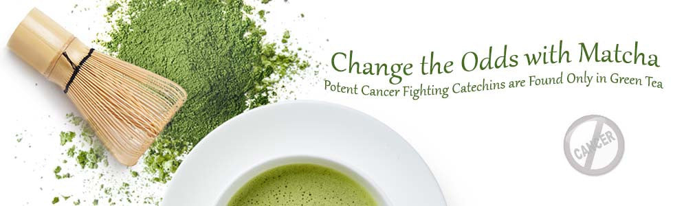Cancer Fighting Catechins