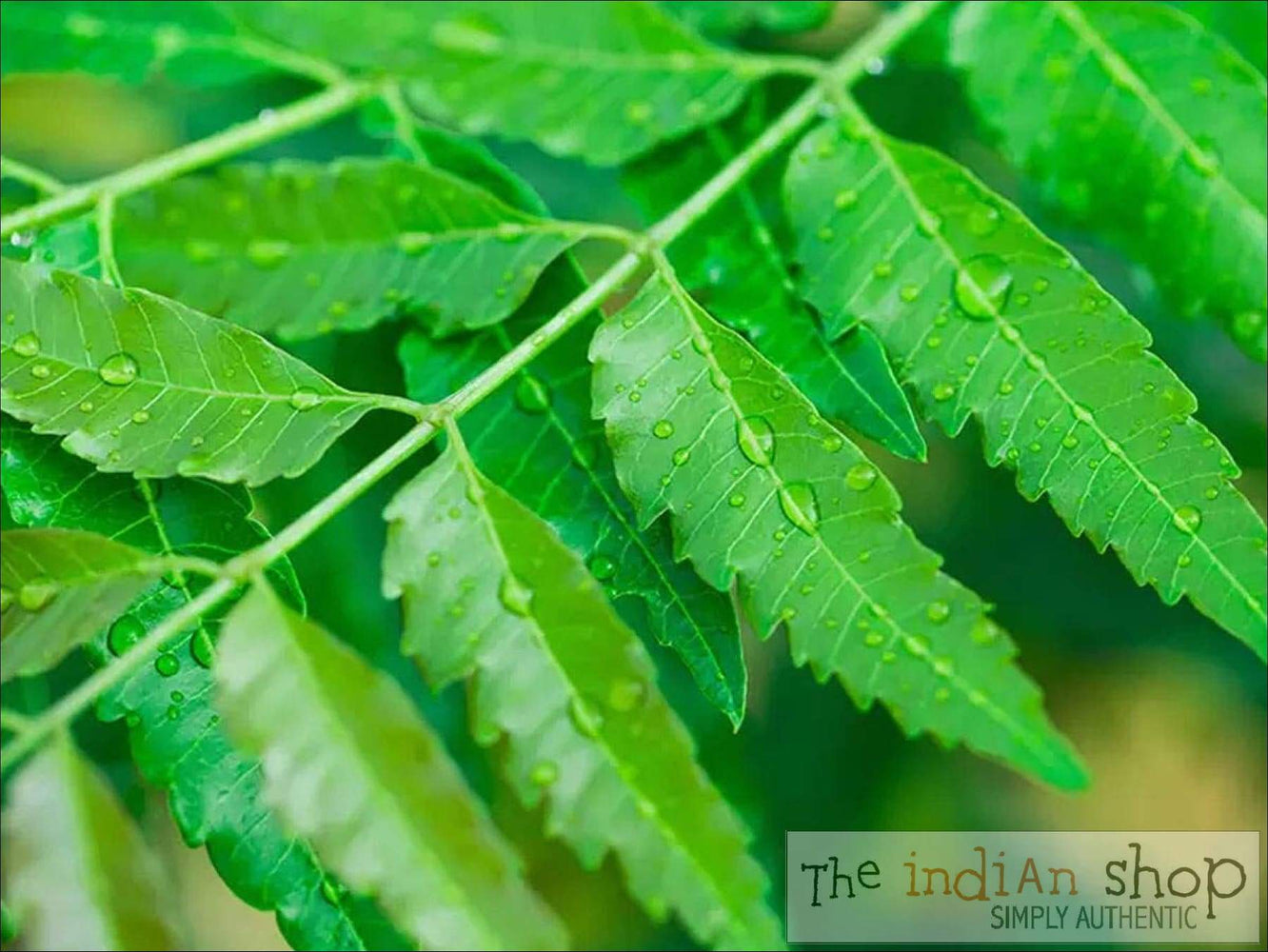 Neem Leaves - Fruits and Vegetables