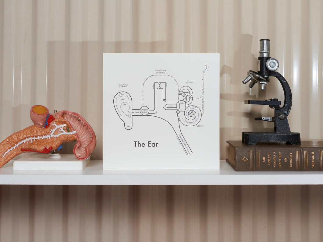 The Ear Diagram Print