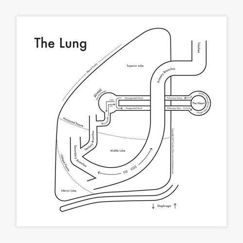 The Lung Anatomy Print