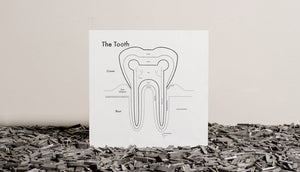 Tooth.jpg