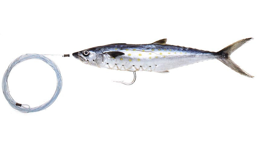 Pro-Series Small Rigged Spanish Mackerel