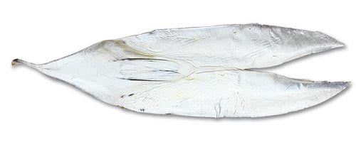 "Unrigged Panama Belly Strip 9""-11"""