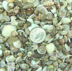 assorted mix of tiny seashells