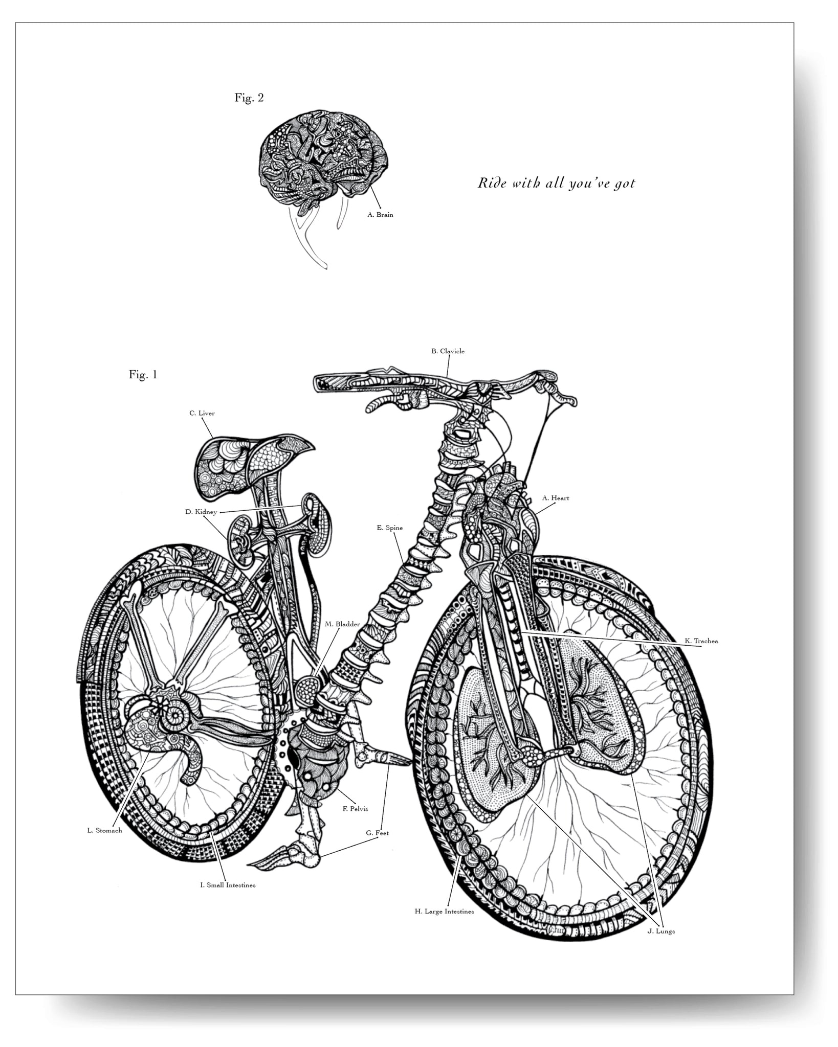 Anatomical Bicycle - 8x10 or 11x14