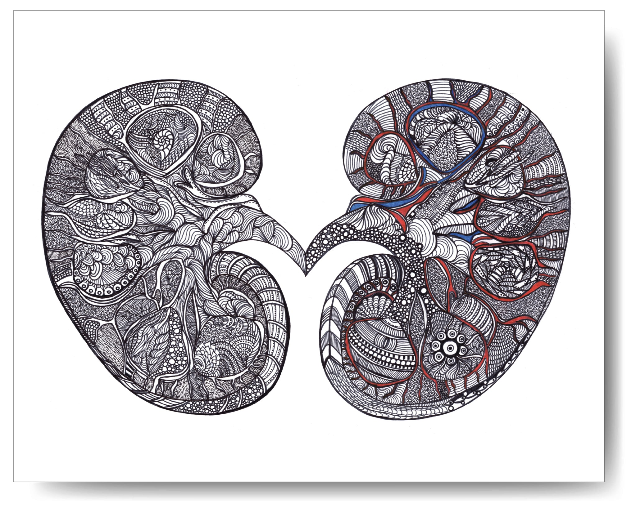 Kidney - 8x10 or 11x14